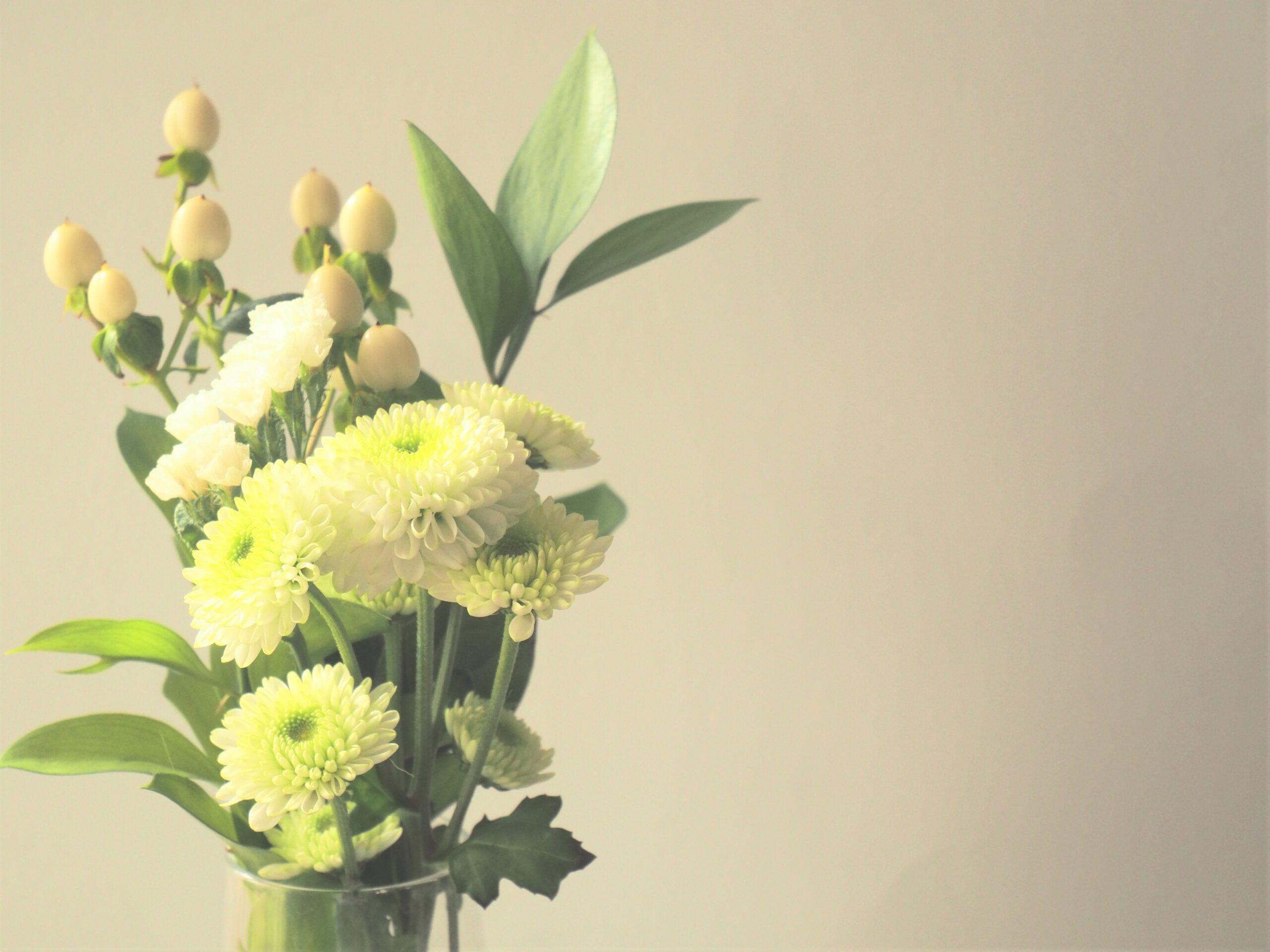 小菊の写真